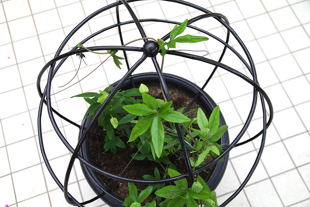Как сделать опору для комнатных вьющихся растений