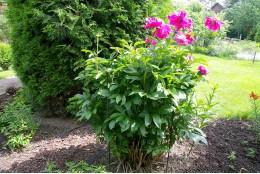 """Опора для растений """"Цилиндрическая"""" узкая."""