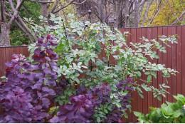 """Опора для вьющихся растений """"Шпалера-веер"""" широкая отдельностоящая"""